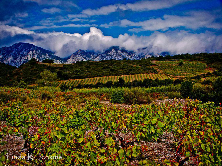 Vinyards along the Maury Wine Trail in Languedoc France