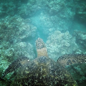 Swimming with the turtles