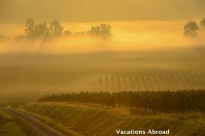 Sunrise over vineyards in Bordeaux France