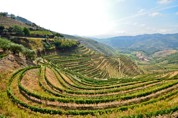 The hilly landscape of the Douro Valley Portugal