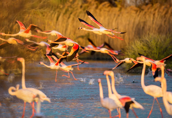 Group-of-flamingos-507055